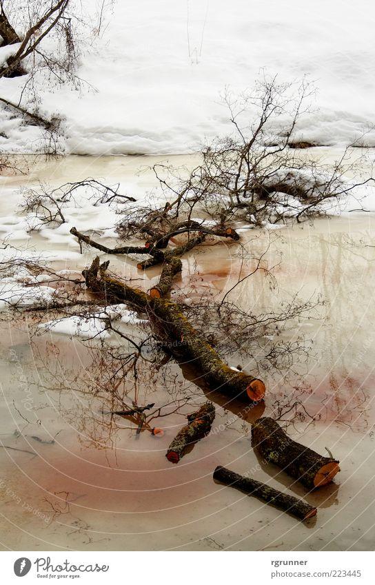 Nasser Grab Natur Pflanze Wasser Winter Klima Schnee Baum Bach Fluss Holz schlafen kalt nass braun rot weiß Mitgefühl friedlich Einsamkeit Erschöpfung Tod