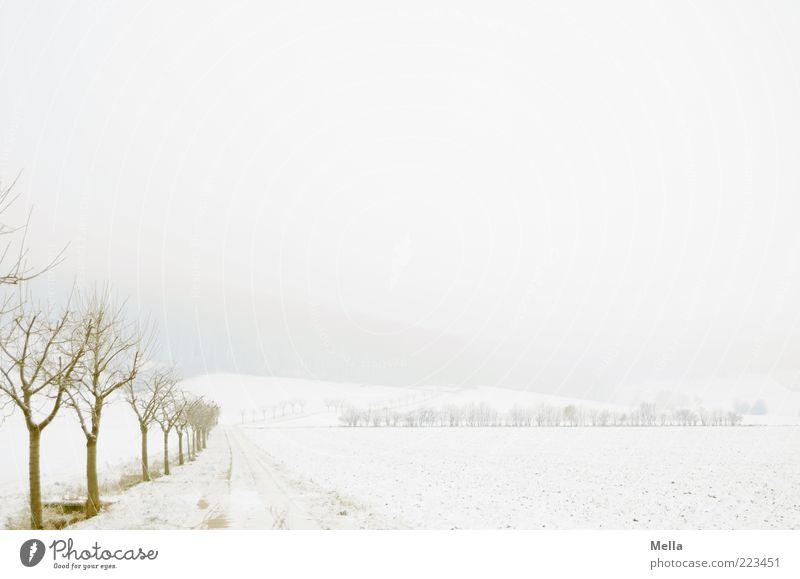 Dem Winter entgegen Natur weiß Baum Pflanze Einsamkeit kalt Schnee Landschaft Umwelt Wege & Pfade Eis Wetter Feld Nebel Klima