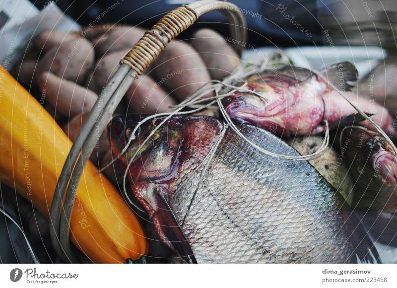 Etwas Fisch zum Abendessen. Lebensmittel Meeresfrüchte Mittagessen Tier Wildtier Totes Tier Tiergruppe blau braun mehrfarbig schwarz silber weiß Natur Farbfoto