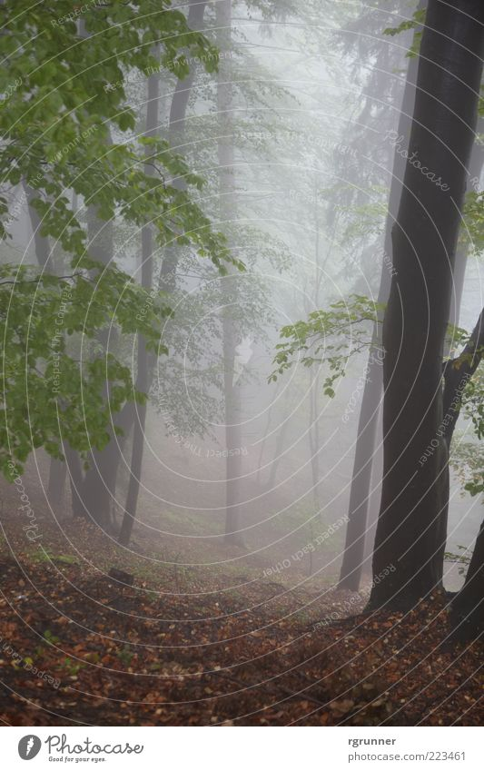 Natur Baum Blatt Wald Herbst Angst Nebel