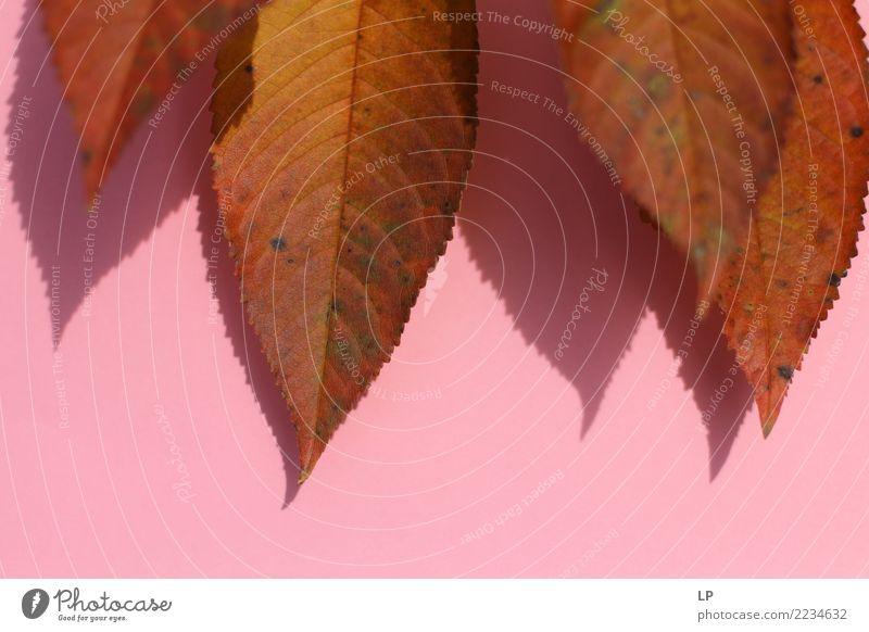 Herbstlaub auf rosa Hintergrund Lifestyle harmonisch Sinnesorgane ruhig Umwelt Natur Urelemente Sommer Baum Blatt Garten Park schön trocken Wärme feminin weich