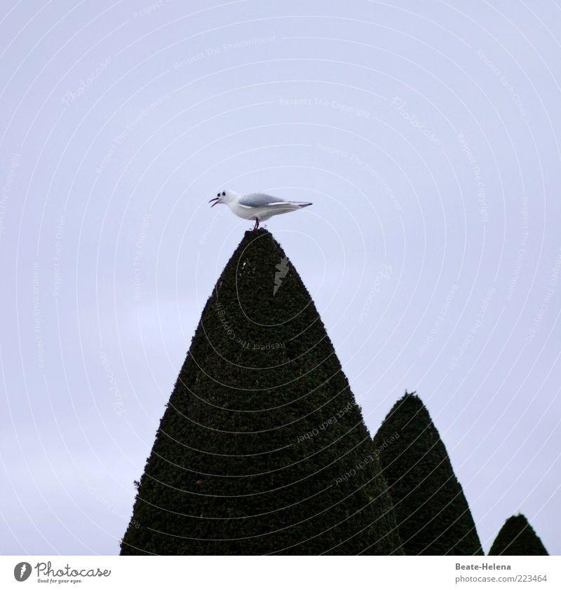 Eins, zwei, drei - es sind noch Plätze frei! grün weiß Tier dunkel oben Gefühle Zufriedenheit Vogel sitzen elegant ästhetisch außergewöhnlich Spitze Neugier