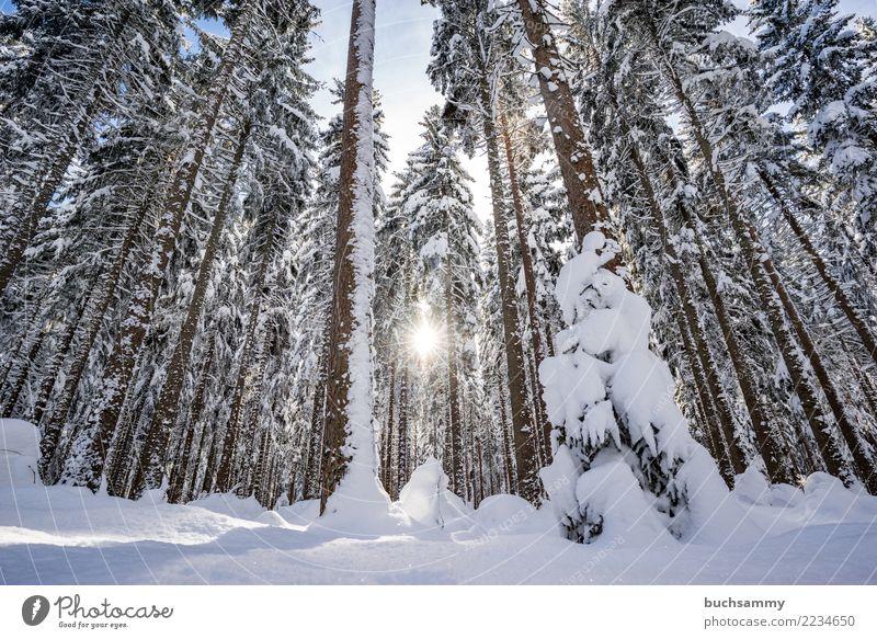 Sonne im Schwarzwald Winter Landschaft Schnee Baum Wald blau weiß Jahreszeiten Schneelandschaft himmel Tanne Farbfoto Außenaufnahme Menschenleer