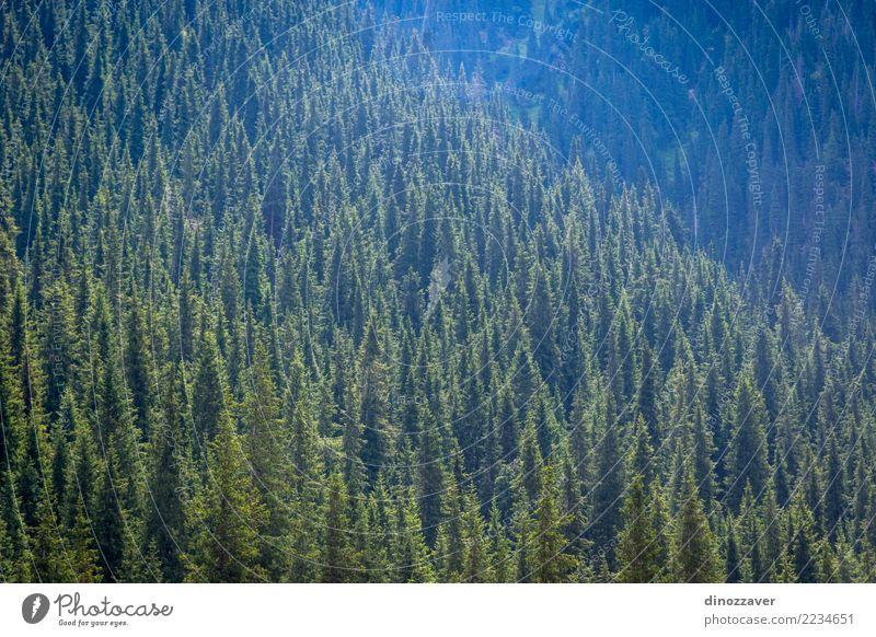 Fluss in Nationalpark Karakol, Kirgisistan Sommer Berge u. Gebirge Natur Landschaft Himmel Wolken Baum Gras Park Wald Hügel Felsen Schlucht Verkehr Straße grün