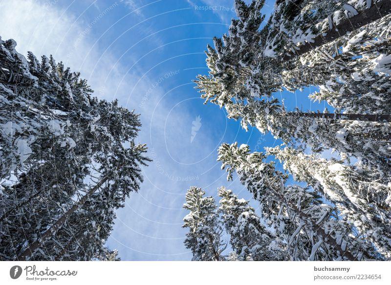 Baumwipfel im Winter Landschaft Wald blau weiß Perspektive Jahreszeiten Querformat Schnee Tannenbaum Schneelandschaft himmel klt Schwarzwald Farbfoto