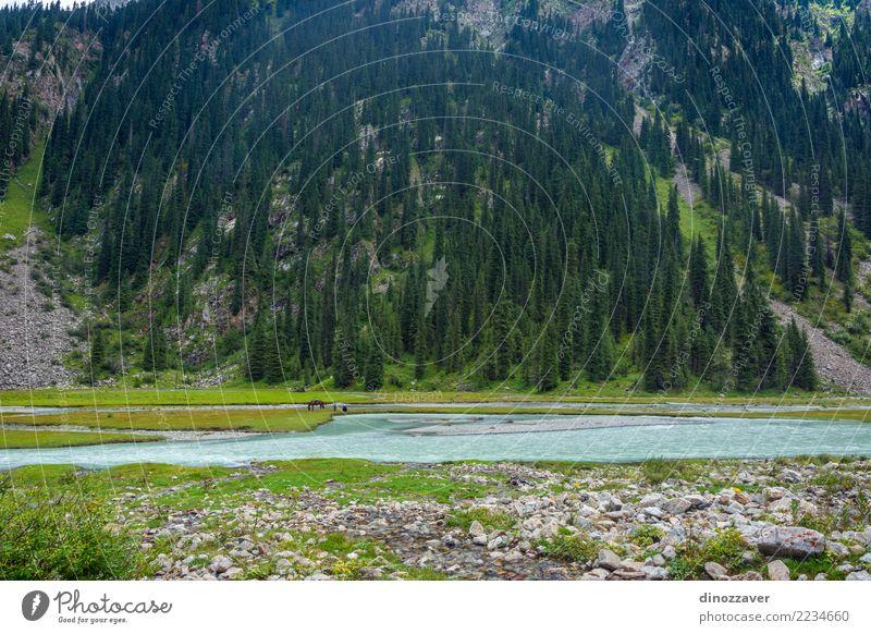 Fischen durch den Fluss, Kirgisistan schön Sommer Berge u. Gebirge Mann Erwachsene Umwelt Natur Landschaft Wolken Baum Park Wald Hügel See Verkehr Pferd grün