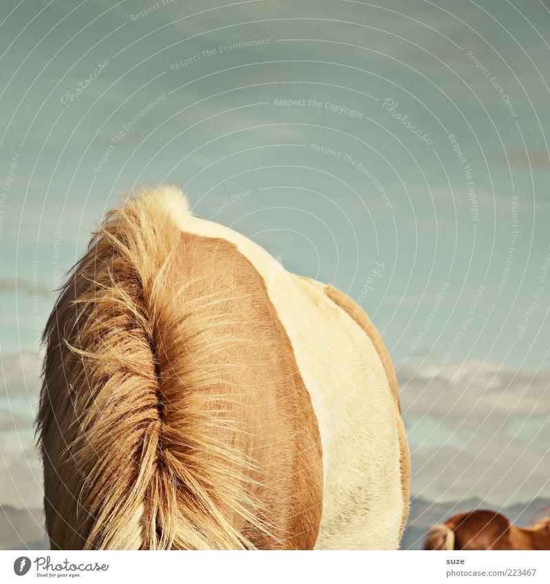 Kopf hoch! Himmel Tier braun lustig Pferd wild Rücken Wildtier außergewöhnlich Fell Hals Fressen Ponys Versteck kopflos