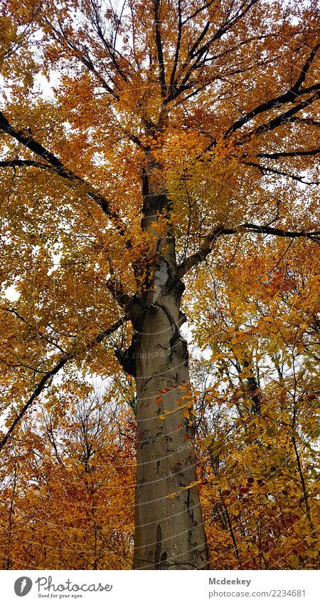 Himmelsleiter Umwelt Natur Landschaft Pflanze Wolken Herbst schlechtes Wetter Regen Baum Sträucher Blatt Wildpflanze Wald verblüht Wachstum authentisch groß