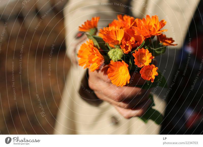 Sommer schön Blume Freude Leben Lifestyle Frühling Hintergrundbild Gefühle Stil Feste & Feiern Zufriedenheit Geburtstag Geschenk kaufen Hilfsbereitschaft