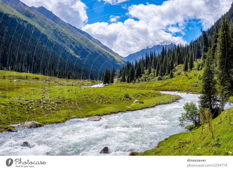 Schönes Tal von Altyn Arashan, Kirgisistan Ferien & Urlaub & Reisen Tourismus Abenteuer Sommer Berge u. Gebirge wandern Natur Landschaft Tier Gras Park Wiese