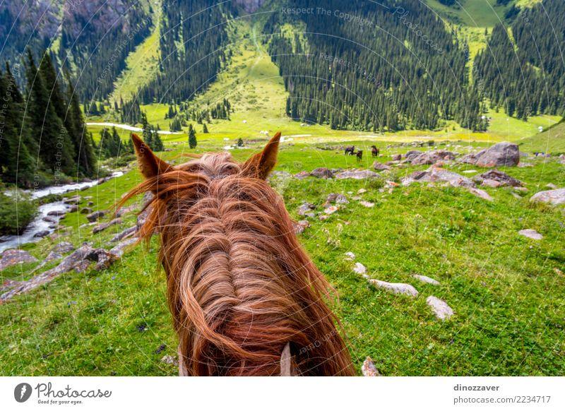 Ansicht über Tal vom Pferd zurück, Kirgisistan Natur Ferien & Urlaub & Reisen Sommer Landschaft Tier Berge u. Gebirge Lifestyle Wiese Wege & Pfade Sport Gras