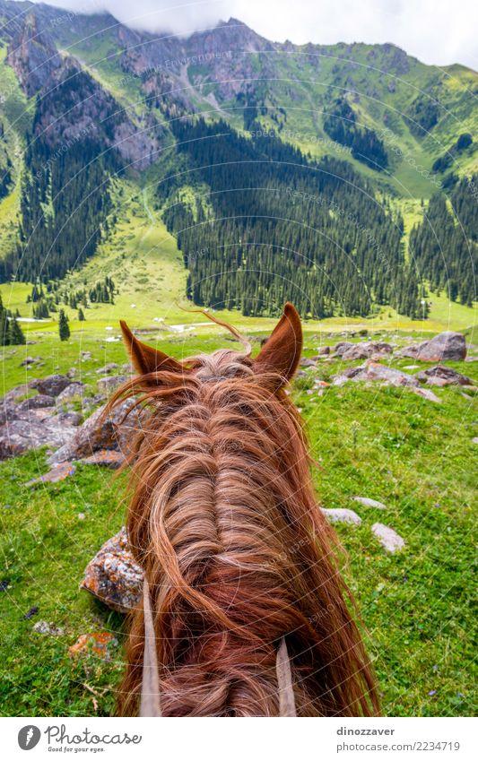Natur Ferien & Urlaub & Reisen Sommer Landschaft Tier Berge u. Gebirge Lifestyle Wiese Wege & Pfade Sport Gras braun Freizeit & Hobby wild Park Verkehr
