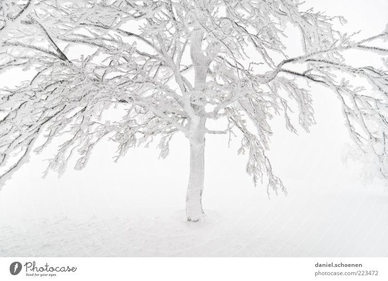 jetzt geht der Winter erst richtig los !! Schnee Klima Wetter Nebel Eis Frost Baum hell weiß Ast Schwarzwald Buche Gedeckte Farben High Key Zweige u. Äste