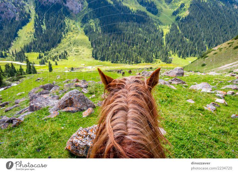 Ansicht zum steilen Weg vom Pferd zurück, Kirgisistan Natur Ferien & Urlaub & Reisen Sommer Landschaft Tier Berge u. Gebirge Lifestyle Wiese Wege & Pfade Sport