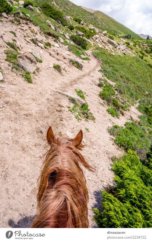 Ansicht zum steilen Weg vom Pferd zurück, Kirgisistan Lifestyle Erholung Freizeit & Hobby Ferien & Urlaub & Reisen Sommer Berge u. Gebirge Sport Natur