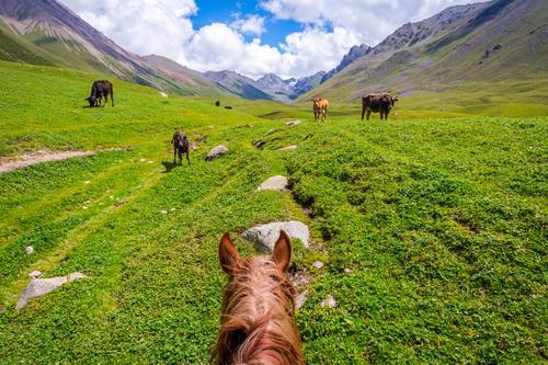 Ansicht über Tal vom Pferd zurück, Kirgisistan Natur Ferien & Urlaub & Reisen Sommer Landschaft Erholung Tier Berge u. Gebirge Lifestyle Wiese Sport Gras braun