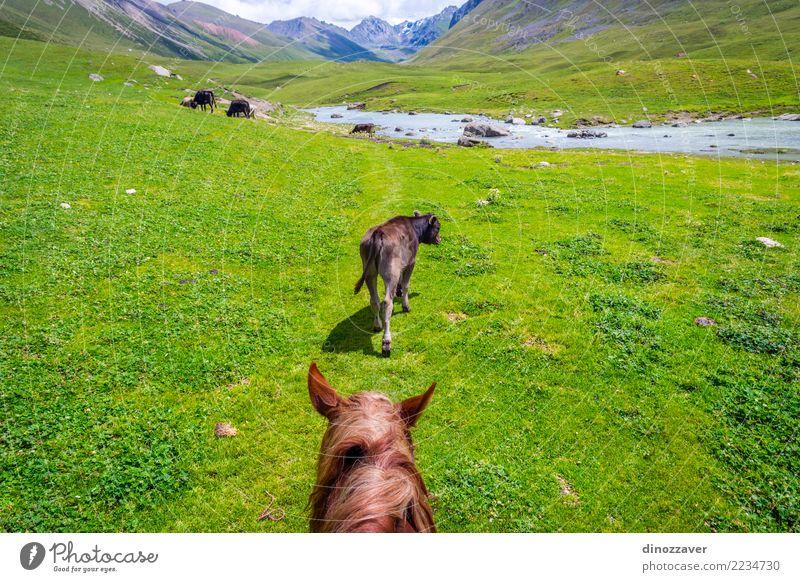 Natur Ferien & Urlaub & Reisen Sommer Landschaft Erholung Tier Berge u. Gebirge Lifestyle Wiese Sport Gras braun wild Park Verkehr Aussicht