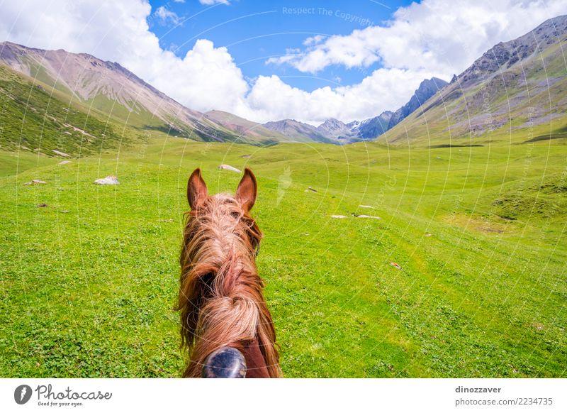 Ansicht über Tal vom Pferd zurück, Kirgisistan Natur Ferien & Urlaub & Reisen Sommer Landschaft Erholung Tier Berge u. Gebirge Lifestyle Wiese Wege & Pfade