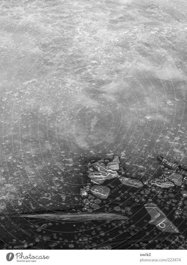 Saisonbedingt geschlossen Umwelt Natur Landschaft Urelemente Wasser Winter Schönes Wetter Eis Frost Blatt Teich See frieren dehydrieren warten kalt grau schwarz