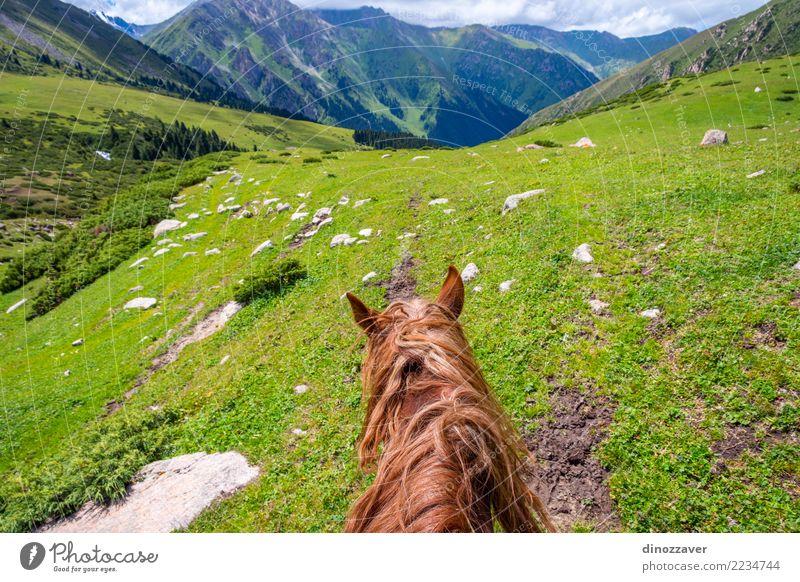 Ansicht über Tal vom Pferd zurück, Kirgisistan Lifestyle Erholung Freizeit & Hobby Ferien & Urlaub & Reisen Sommer Berge u. Gebirge Sport Natur Landschaft Tier