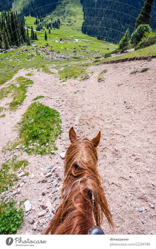 Altyn-Arashan-Tal, Kirgisistan Ferien & Urlaub & Reisen Tourismus Abenteuer Sommer Berge u. Gebirge wandern Natur Landschaft Tier Gras Park Wiese Wald Hügel