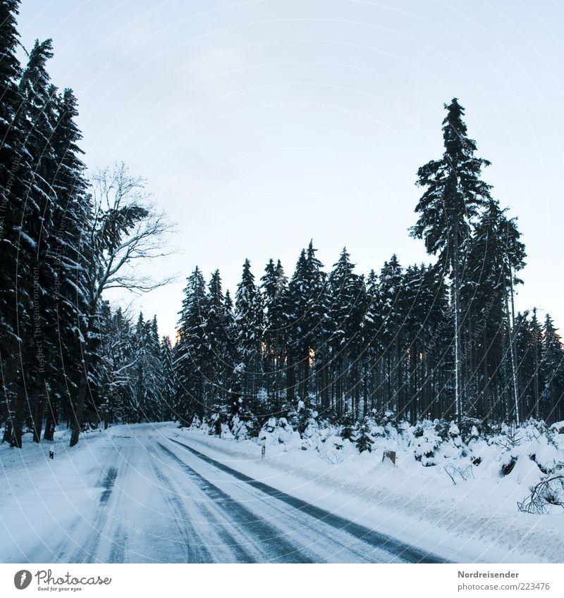 Winterfreuden Natur Landschaft Klima Eis Frost Wald Verkehrswege Straße Wege & Pfade Zeichen Verkehrszeichen fahren bedrohlich kalt Stimmung Akzeptanz