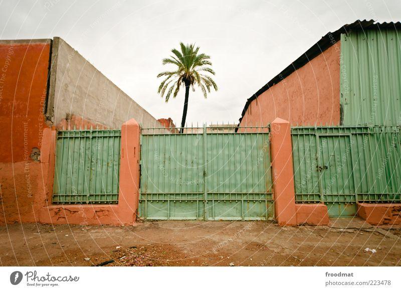 naturschutzgebiet Natur grün Baum Pflanze Wolken Einsamkeit Haus Wand Umwelt Mauer dreckig Fassade geschlossen kaputt trist einzigartig