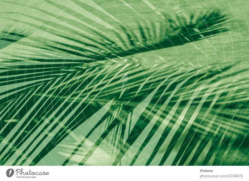what a feeling III Ferien & Urlaub & Reisen Pflanze Sommer grün Blatt Palme Doppelbelichtung