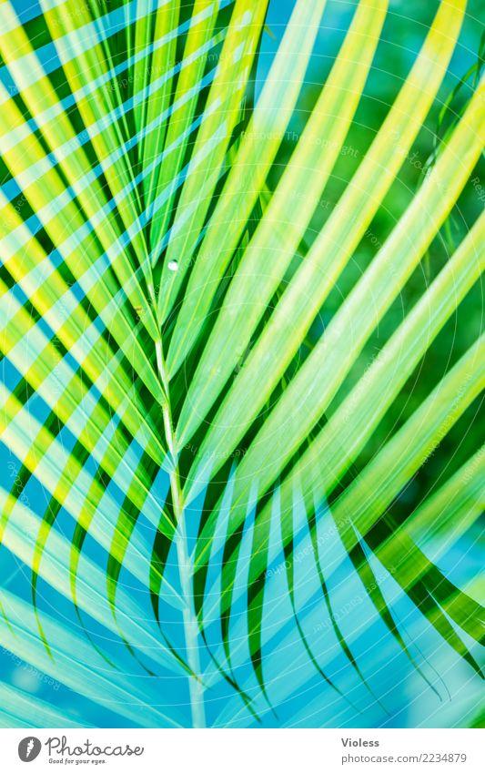 what a feeling Ferien & Urlaub & Reisen Pflanze blau Sommer grün Sonne Blatt Strand genießen Doppelbelichtung Palme Karibik