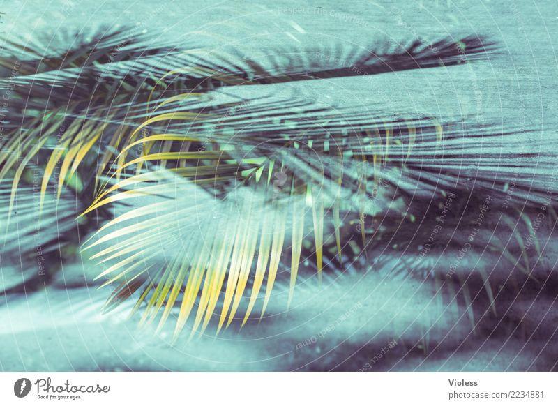what a feeling II Palme Blatt Doppelbelichtung Ferien & Urlaub & Reisen Sommer blau grün Pflanze genießen Sonne Karibik Strand