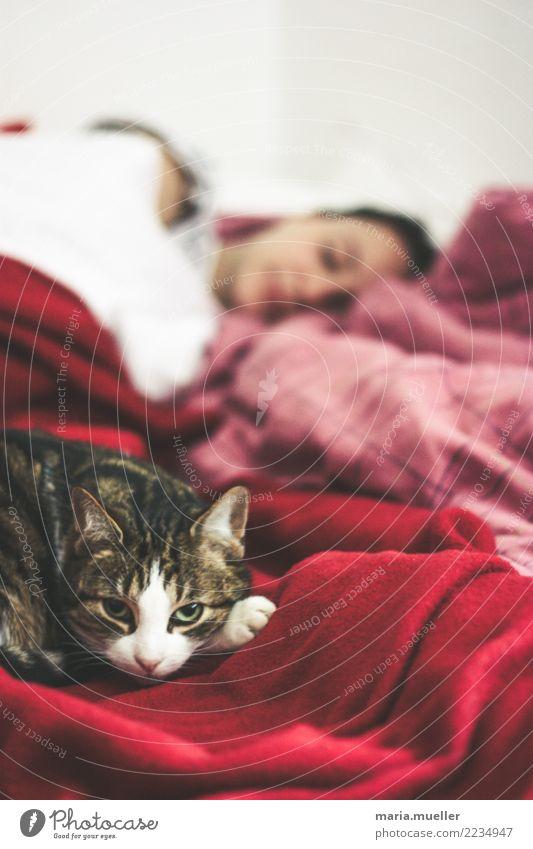 Siesta feminin Frau Erwachsene 1 Mensch 18-30 Jahre Jugendliche Tier Haustier Katze Tiergesicht Denken genießen schlafen träumen wandern Häusliches Leben