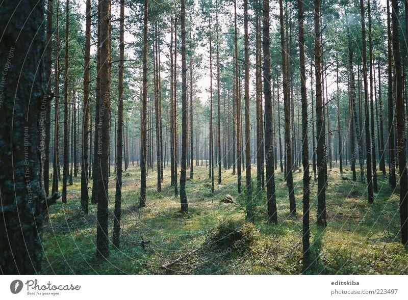Zauberwald Ferien & Urlaub & Reisen Ausflug Sightseeing Sommer Sonne entdecken genießen schön Tatkraft Wald Zauberei u. Magie Morgen Baum mehrfarbig