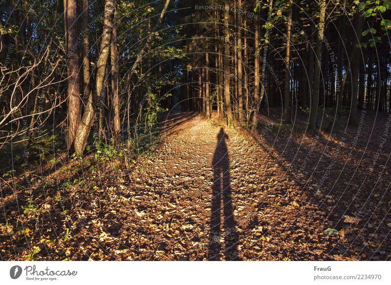 !Trash! 2017 | Am Ende des Tages (Jahres) feminin Mensch 45-60 Jahre Erwachsene Natur Wald Laubwald stehen braun Wege & Pfade Wegkreuzung Abend Sonne Blatt