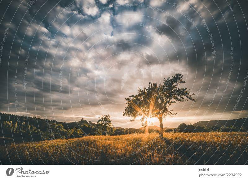 Sunset Natur Landschaft Pflanze Himmel Wolken Horizont Sonne Sonnenaufgang Sonnenuntergang Sonnenlicht Sommer Herbst Schönes Wetter Baum Gras Wiese Feld Wald