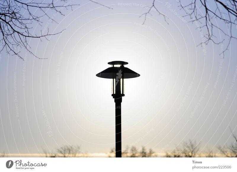 solarbetrieben Energiewirtschaft Sonnenenergie leuchten Straßenbeleuchtung Schönes Wetter Zweig Wolkenloser Himmel Farbfoto Außenaufnahme Menschenleer