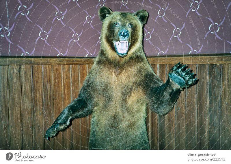 schön Tier Farbe braun dreckig Macht wild geheimnisvoll gruselig Schmerz stark Wildtier exotisch Aggression Scham Begierde