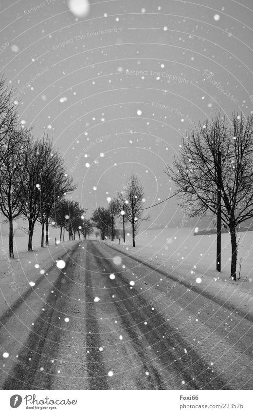 Stille II Natur weiß Baum schön Winter ruhig schwarz Straße Schnee Bewegung Landschaft Umwelt Schneefall Stimmung Zeit einzigartig