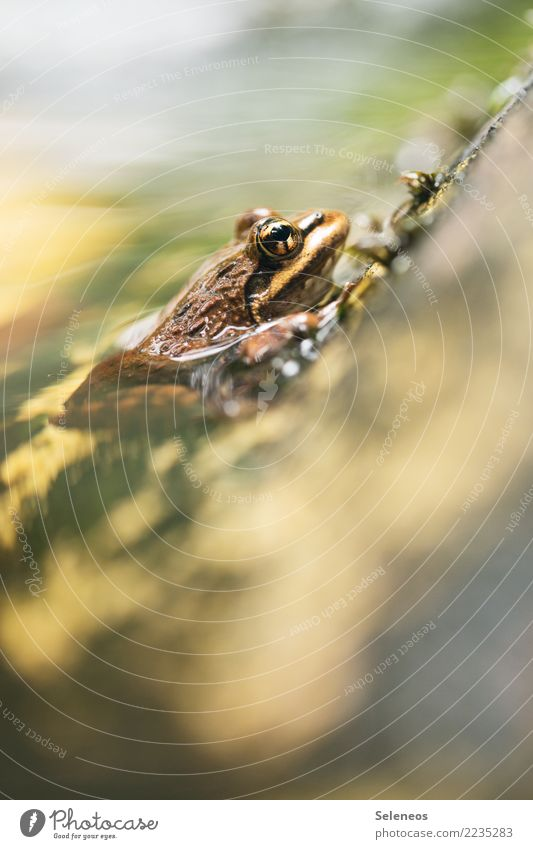 Erfrischungsbad Ausflug Sommer Umwelt Natur Garten Park Küste Seeufer Flussufer Teich Bach Tier Wildtier Frosch Tiergesicht 1 frei nah nass natürlich Farbfoto