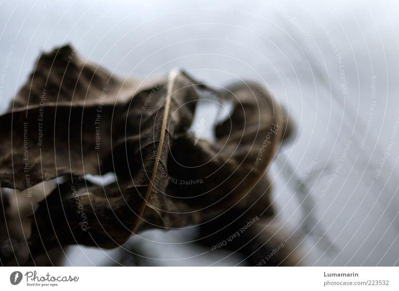Vergangenheit Natur alt Pflanze Blatt dunkel Herbst grau Umwelt Traurigkeit braun Zeit trist natürlich Wandel & Veränderung Vergänglichkeit trocken