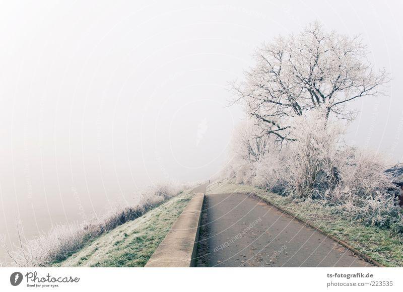 Winternebel Himmel Natur Pflanze grün weiß Baum Landschaft kalt Wege & Pfade grau Eis Nebel Sträucher Frost Ende