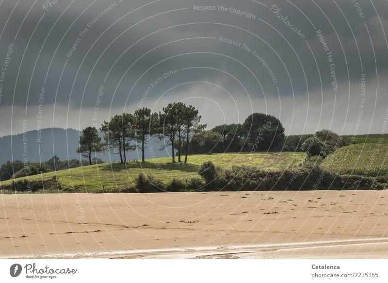 Strandlandschaft Himmel Natur Ferien & Urlaub & Reisen Sommer grün Wasser Landschaft Baum Erholung ruhig gelb Umwelt natürlich Küste Gras