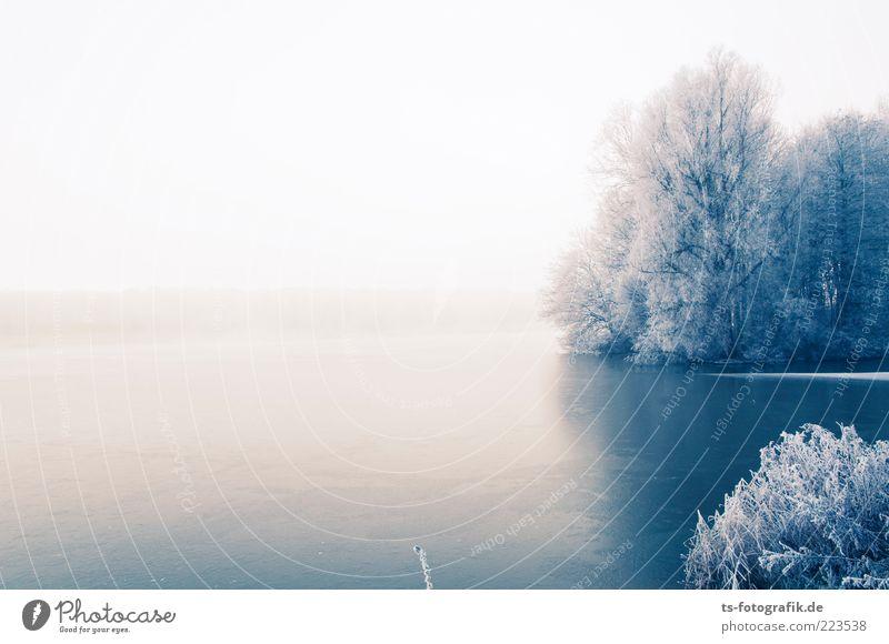 Winter Blues I Umwelt Natur Landschaft Pflanze Himmel Horizont Nebel Eis Frost Schnee Baum Wald Küste Seeufer Flussufer kalt blau weiß Raureif Eisfläche Ferne
