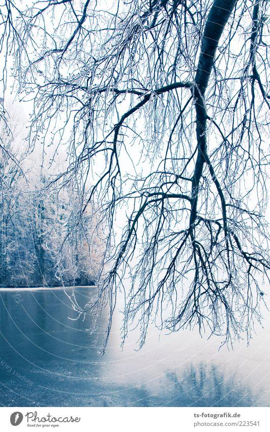 Winter Blues II Umwelt Natur Landschaft Pflanze Urelemente Eis Frost Schnee Baum Wald Küste Seeufer Flussufer kalt blau weiß Raureif Ast hängend Eisfläche