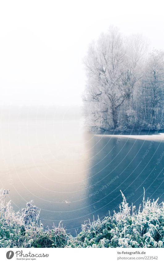 Winter Blues III Umwelt Natur Landschaft Pflanze Urelemente Horizont Nebel Eis Frost Schnee Baum Sträucher Wald Küste Seeufer Flussufer Teich kalt blau weiß
