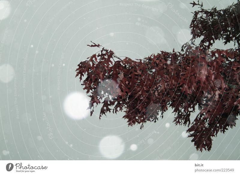 AST Natur Baum Winter Blatt kalt dunkel Schnee grau Umwelt Schneefall Wetter Klima Wandel & Veränderung Ast hängen Surrealismus