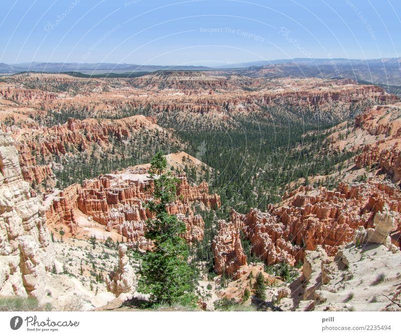 Bryce Canyon National Park Tourismus Natur Sand Baum Felsen Stein braun rot Utah usa Nationalpark Hoodoos Gesteinsformationen Erosion bryce canyon verwittert
