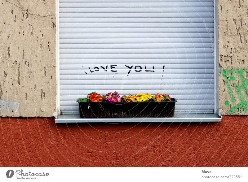 i love you! Blume Haus Mauer Wand Fassade Fenster Stein Beton Zeichen Schriftzeichen Graffiti Duft Kitsch grau rot Gefühle Glück Frühlingsgefühle Liebe Wahrheit