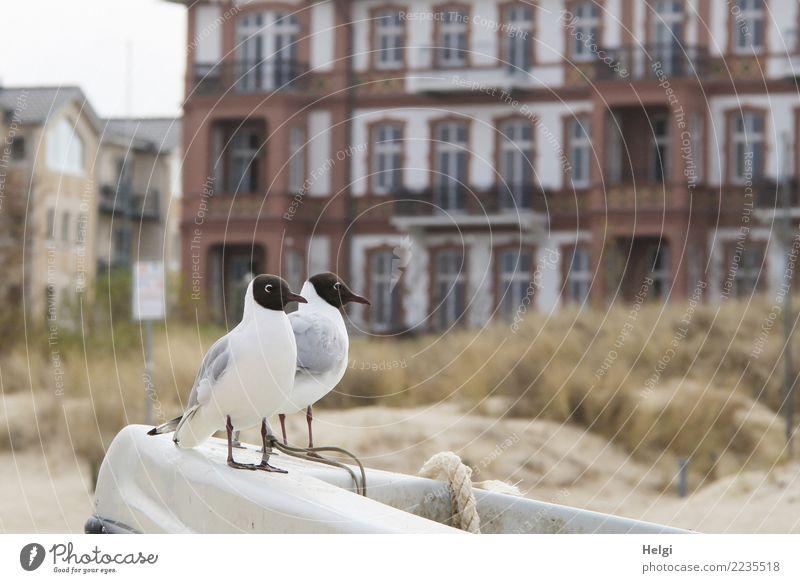 Spannung | wo gibts was zu futtern? Natur Pflanze Stadt Haus Tier Strand Leben Umwelt Frühling natürlich Gras Vogel Fassade Zusammensein Sand Wildtier