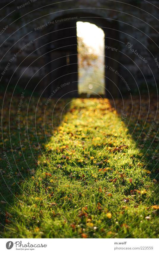Cellar Door Garten Umwelt Natur Sonnenlicht Herbst Schönes Wetter Gras Moos Park Wiese Wolfhagen Menschenleer Mauer Wand Tür gelb grün ruhig Historische Bauten