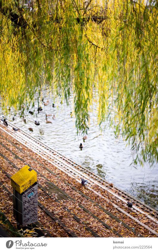 Natürliche Girlanden Natur Baum grün Pflanze Blatt Tier gelb Herbst Umwelt See braun Treppe Wachstum Wildtier Tiergruppe leuchten